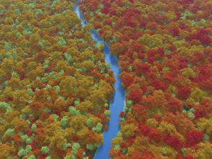 広大で鮮やかな紅葉の森を貫く一本の澄んだ川のイラスト素材 [FYI04635578]