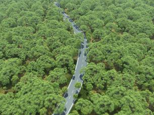 広大な新緑の森を貫く一本道のイラスト素材 [FYI04635580]