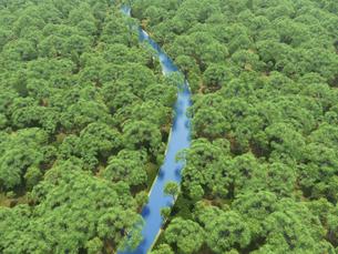 広大な新緑の森を貫く一本の澄んだ川のイラスト素材 [FYI04635581]