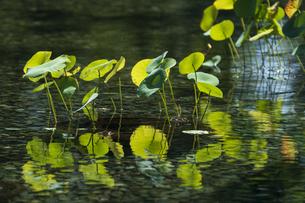 昭和記念公園の美しい日本庭園の写真素材 [FYI04635847]