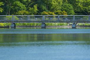 昭和記念公園の美しい日本庭園の写真素材 [FYI04635848]