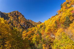 色付く山の写真素材 [FYI04635849]