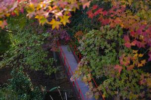 秋の水沢もみじ谷の紅葉に包まれる橋を渡る観光客の写真素材 [FYI04635938]