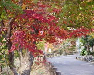 秋の水沢もみじ谷の紅葉に包まれる道の写真素材 [FYI04635940]