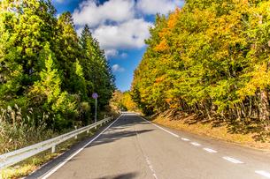 紅葉に挟まれた道路の風景。高野龍神スカイライン。の写真素材 [FYI04636043]