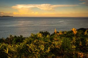 【香川県 さぬき市】大串自然公園から見る瀬戸内海の自然風景の写真素材 [FYI04636172]