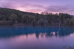 夜明けの青い池の写真素材 [FYI04636400]