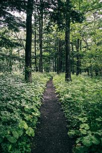 林道の写真素材 [FYI04636770]