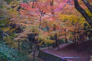 秋の水沢もみじ谷の紅葉の写真素材 [FYI04637539]