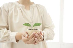 双葉の鉢植えを持っている女性の写真素材 [FYI04637628]