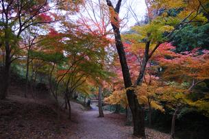 秋の水沢もみじ谷の紅葉の写真素材 [FYI04637675]