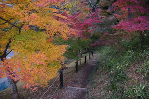 秋の水沢もみじ谷の紅葉に包まれる道の階段の写真素材 [FYI04637872]