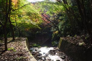 秋の水沢もみじ谷の紅葉に包まれる小川の写真素材 [FYI04637905]