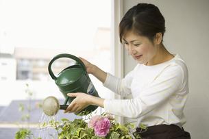 植物に水をやる女性の写真素材 [FYI04638058]