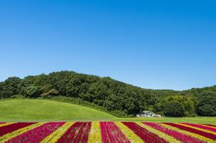 羽毛ゲイトウ咲く武蔵丘陵森林公園の写真素材 [FYI04638855]