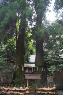 高千穂の風景 高千穂神社(ご神木)の写真素材 [FYI04639256]