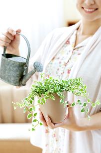 観葉植物に水やりする女性の写真素材 [FYI04639461]