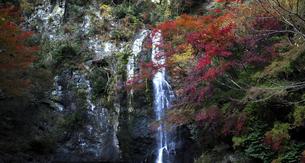 箕面の滝の写真素材 [FYI04639476]