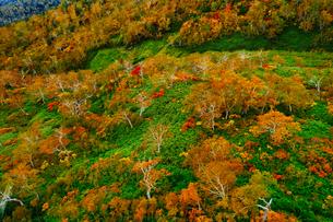 旭岳の紅葉の写真素材 [FYI04639496]