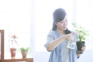 植物に水をやるミドル女性の写真素材 [FYI04639533]