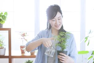 植物に水をやるミドル女性の写真素材 [FYI04639534]