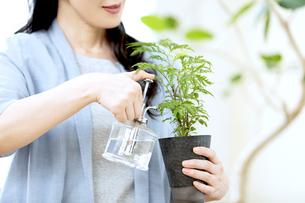 植物に水をやるミドル女性の写真素材 [FYI04639538]