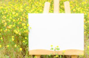 お花畑とキャンバスのコピースペースの写真素材 [FYI04639758]