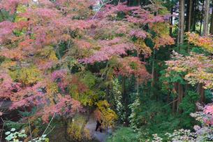 秋の水沢もみじ谷の紅葉に包まれる道を歩く観光客の写真素材 [FYI04640059]