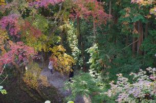 秋の水沢もみじ谷の紅葉に包まれる道を歩く観光客の写真素材 [FYI04640062]