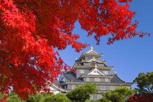 紅葉と岡山城の写真素材 [FYI04640791]