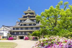 つつじ咲く岡山城の写真素材 [FYI04640792]