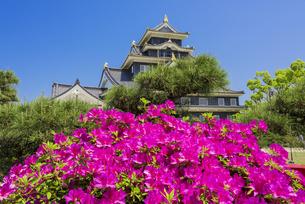 つつじ咲く岡山城の写真素材 [FYI04640793]