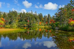 大雪高原温泉緑沼の紅葉の風景の写真素材 [FYI04642094]