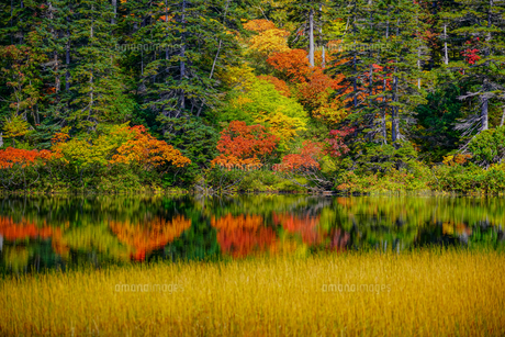 大雪高原温泉緑沼の紅葉風景の写真素材 [FYI04642095]