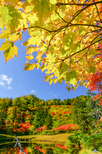 大雪高原温泉沼めぐり滝見沼の紅葉の風景の写真素材 [FYI04642164]