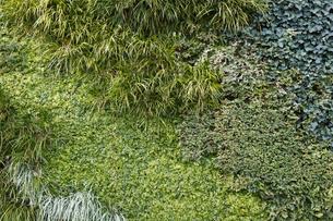 多種多様な植物の背景の写真素材 [FYI04642572]