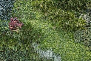多種多様な植物の背景の写真素材 [FYI04642573]