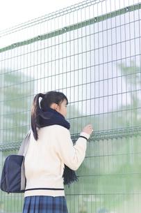 フェンスから眺める女子校生の写真素材 [FYI04643252]