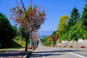 ナナカマドのある風景の写真素材 [FYI04643693]