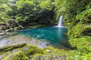 滝壺と森の緑に包まれるにこ淵の写真素材 [FYI04644086]
