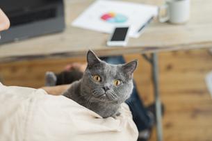 リモートワークをする男性と猫の写真素材 [FYI04644194]