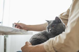 リモートワークをする男性と猫の写真素材 [FYI04644224]