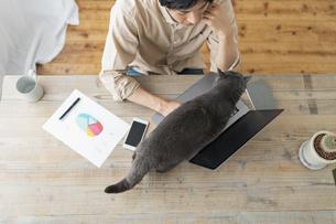 リモートワークをする男性と猫の写真素材 [FYI04644238]
