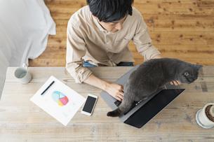 リモートワークをする男性と猫の写真素材 [FYI04644247]