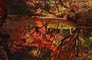 晩秋の六義園の紅葉の写真素材 [FYI04644292]