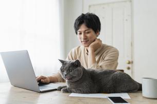 リモートワークをする男性と猫の写真素材 [FYI04644294]