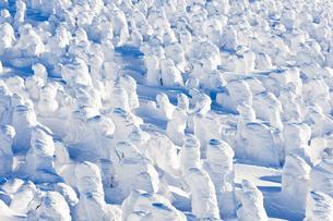 蔵王樹氷の写真素材 [FYI04644616]