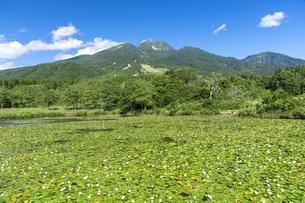 スイレン咲くいもり池と妙高山の写真素材 [FYI04644630]