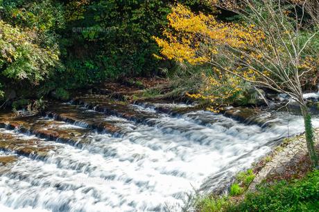 湯平温泉(大分県由布市)花合野川の紅葉の写真素材 [FYI04644670]