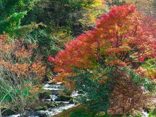 湯平温泉(大分県由布市)花合野川の紅葉の写真素材 [FYI04644671]